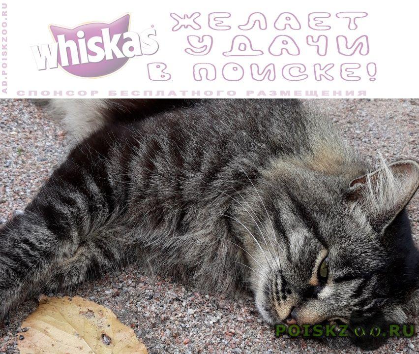 Найден кот внимание всем   помогите   г.Красногорск