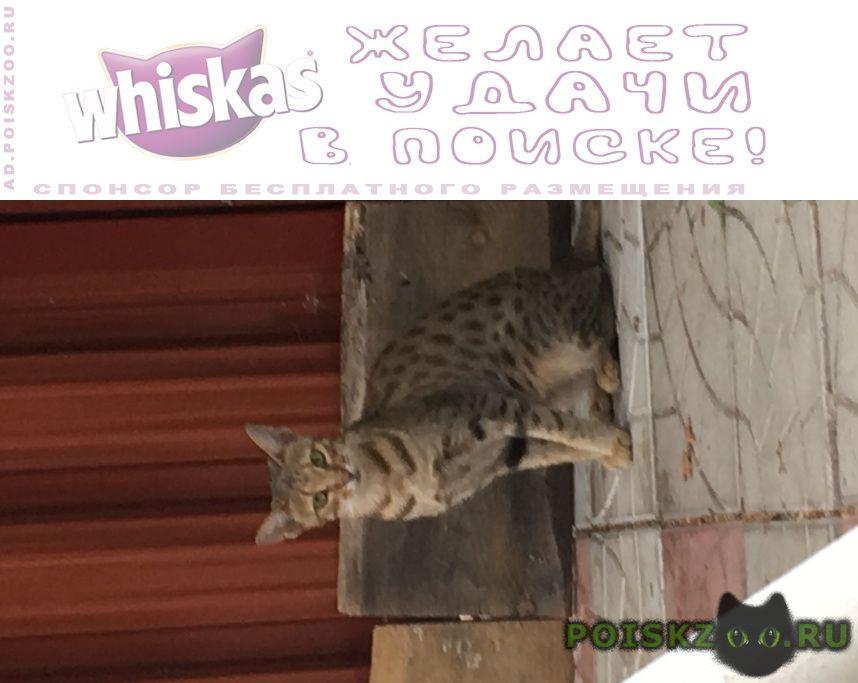 Найдена кошка г.Родники (Московская обл.)