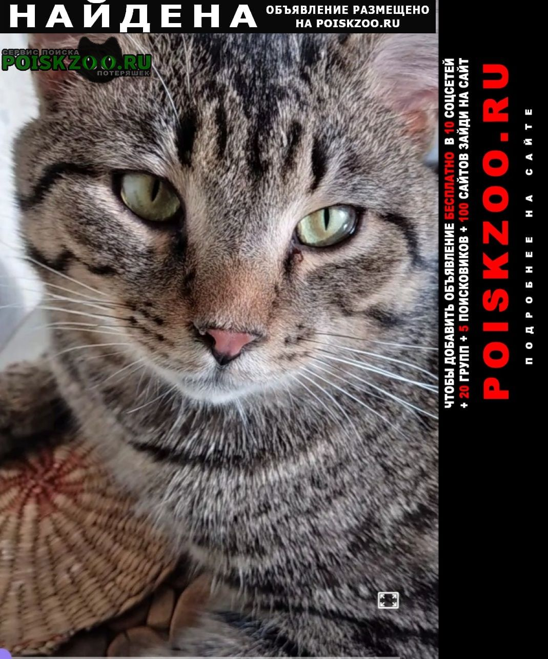 Найден кот 2 марта утром Мытищи