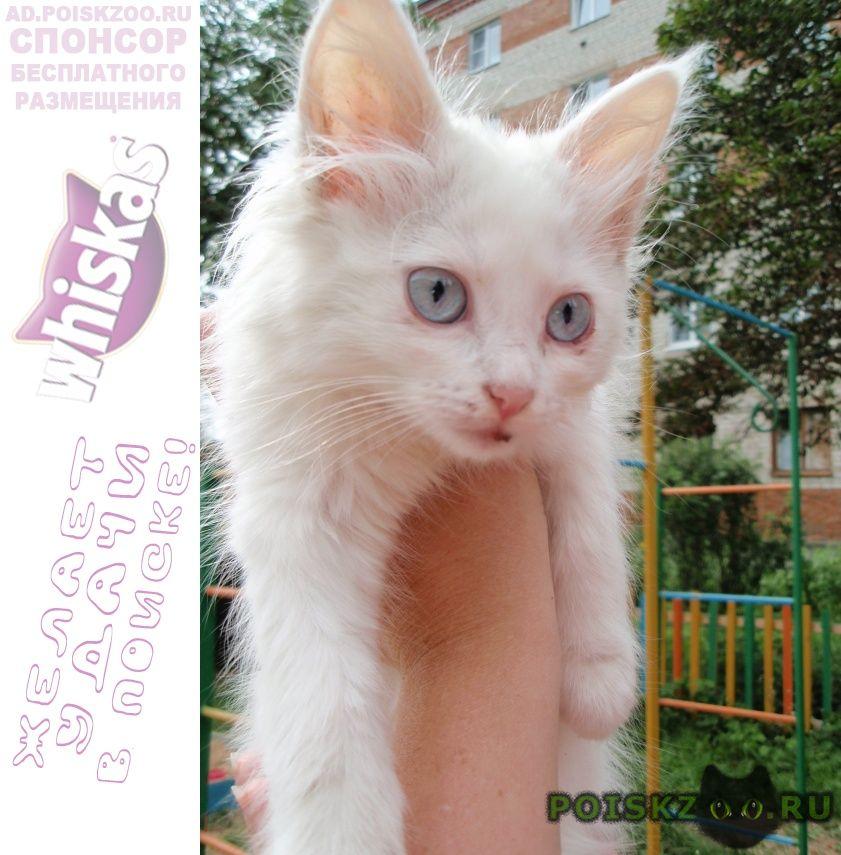 Найдена кошка ищет добрую и любящую семью. г.Владимир