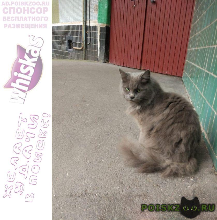 Найдена кошка тушино, кот г.Москва