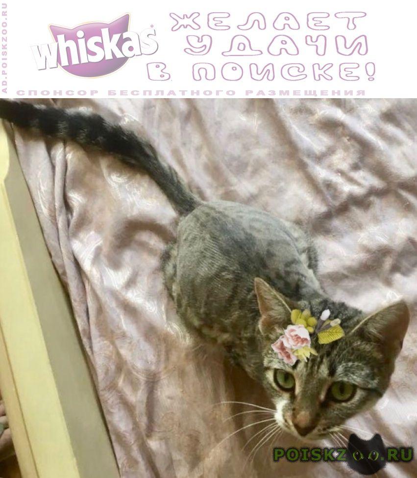Найдена кошка ищет новых хозяев г.Москва