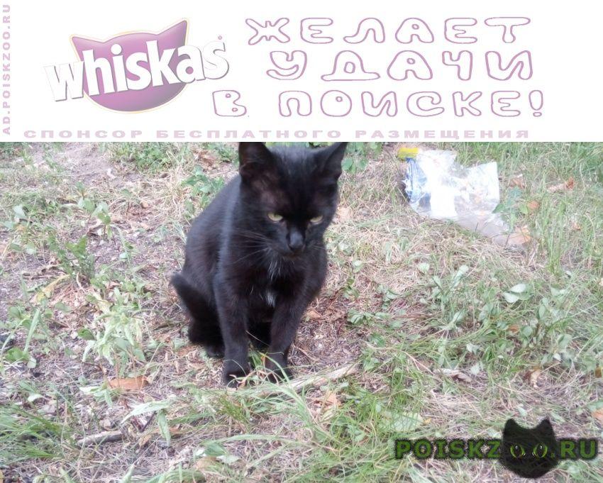Найдена кошка чёрная молодая кошечка ждёт хозяина(ку) г.Москва