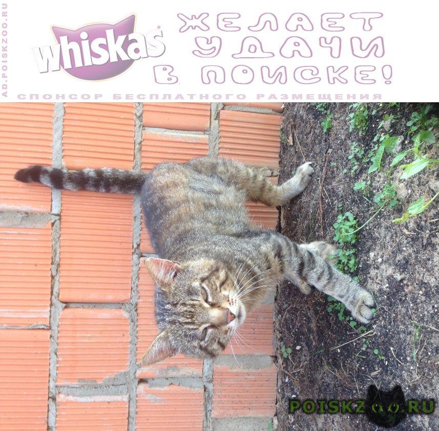 Найден кот г.Красногорск