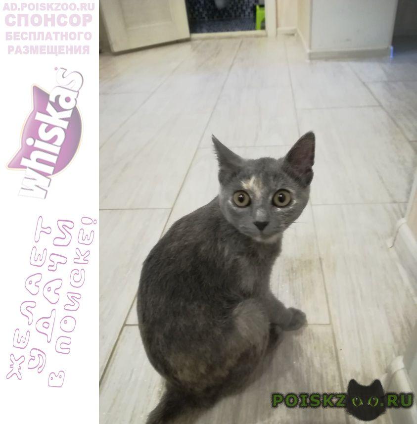 Найдена кошка в районе печерска котенок г.Смоленск