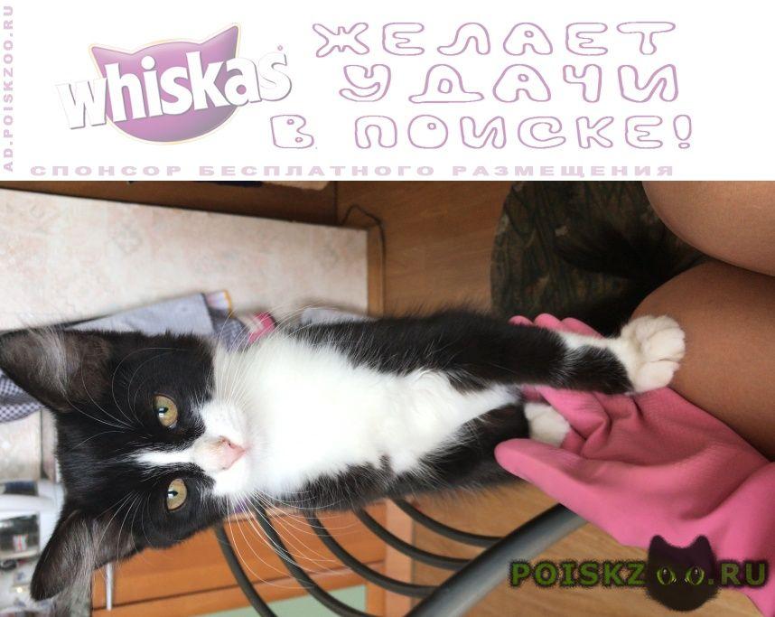 Найдена кошка котёнок девочка г.Москва