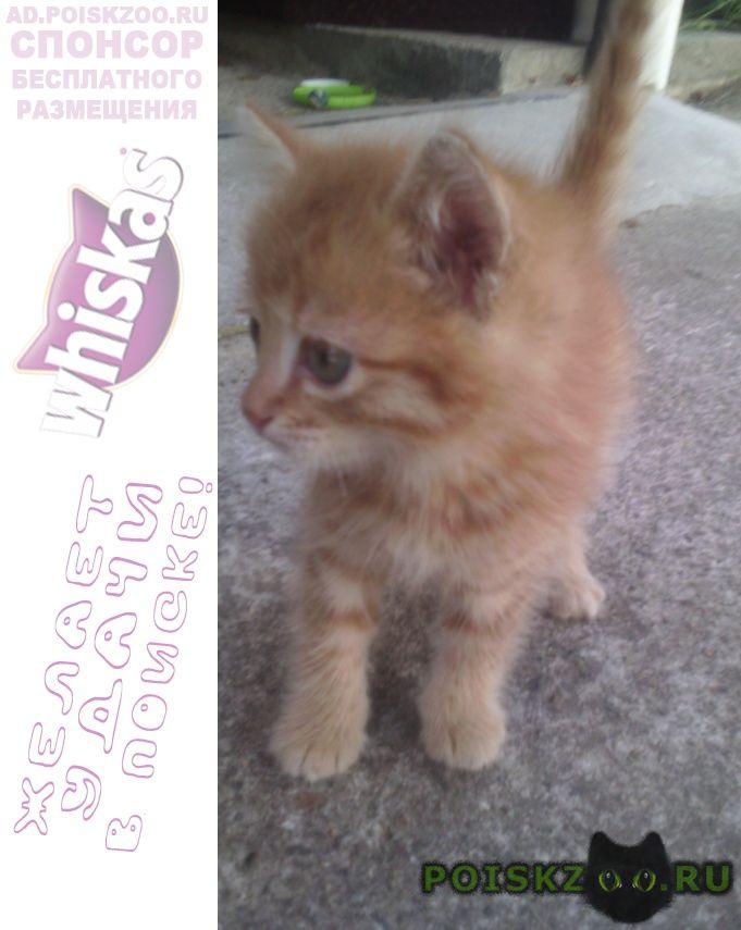Найдена кошка котенок сентября г.Сочи