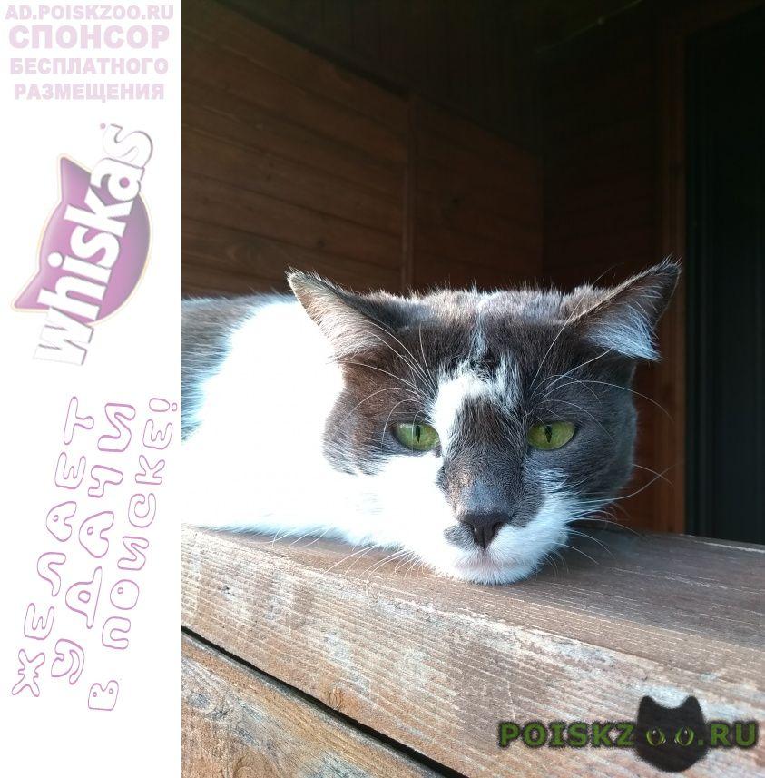 Найдена кошка на территории снт г.Апрелевка