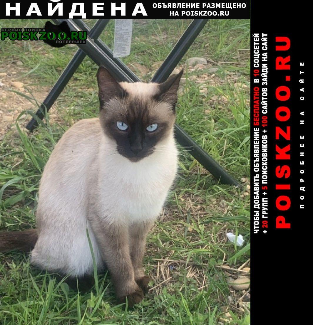 Найдена кошка сиамская Дорохово