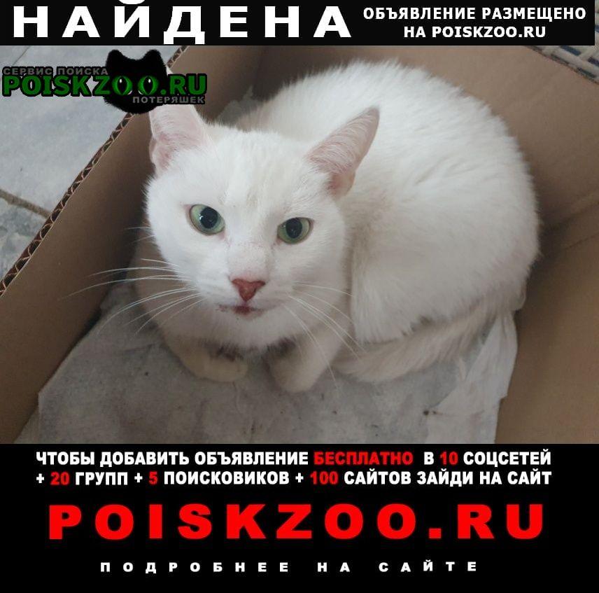 Найдена кошка Троицк