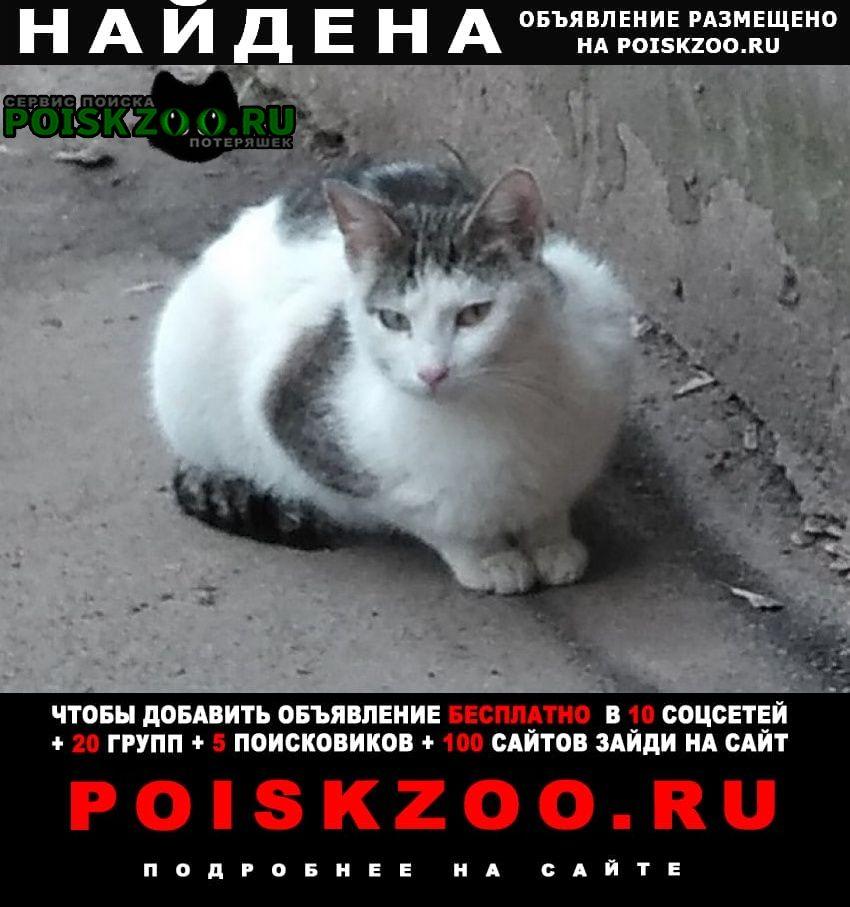 Найдена кошка белая с темными пятнами. Истра