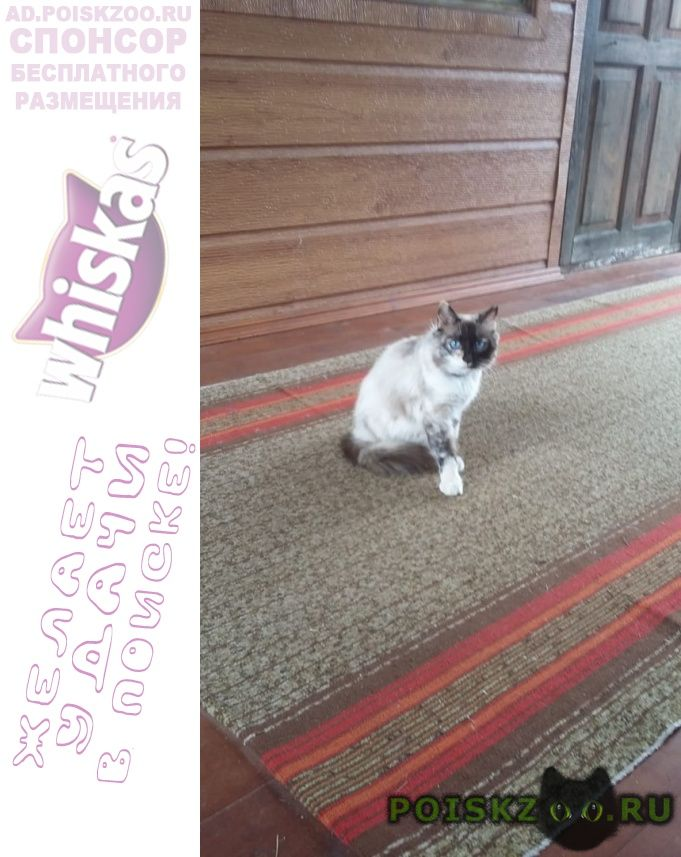 Найдена кошка г.Чехов