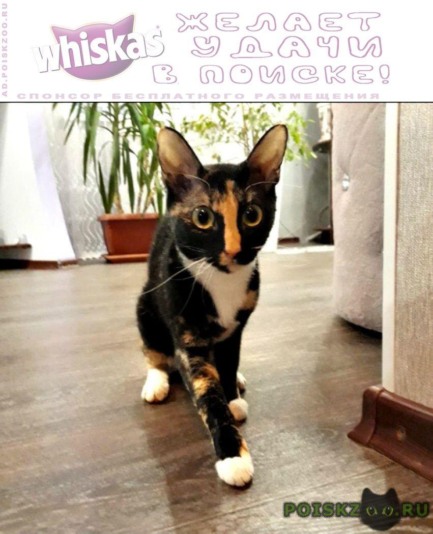 Найдена кошка г.Томск