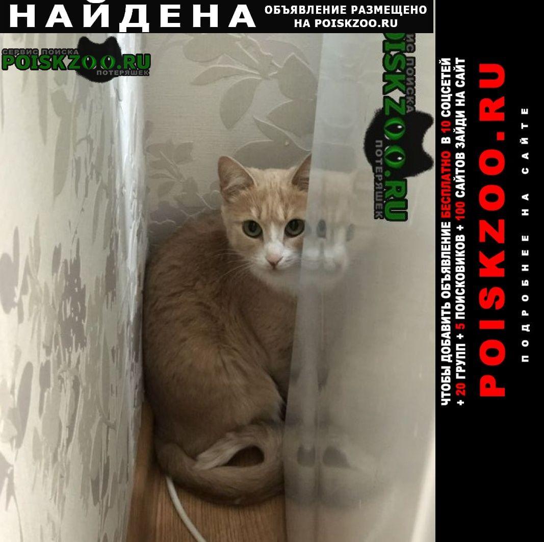 Найдена кошка рыжий Московский