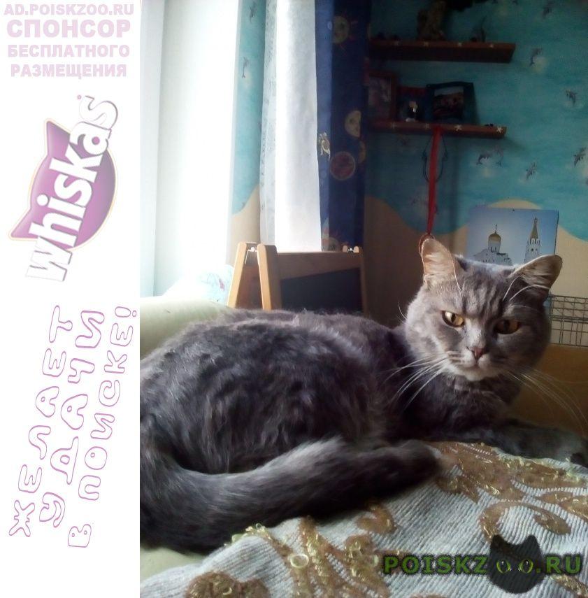 Найден кот г.Архангельск