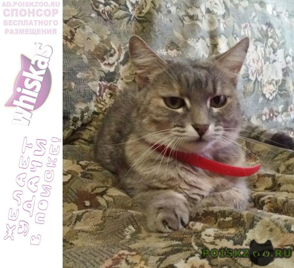Найдена кошка в красном ошейнике г.Волоколамск
