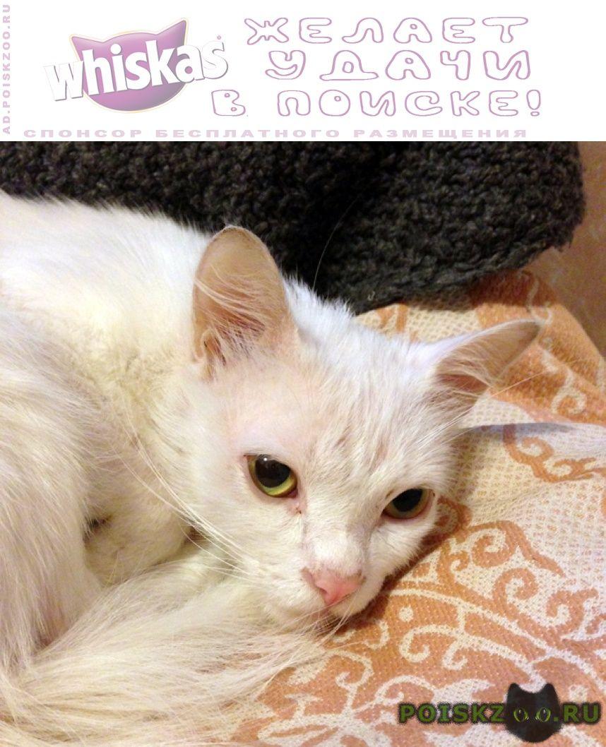 Найден кот белый домашний г.Москва