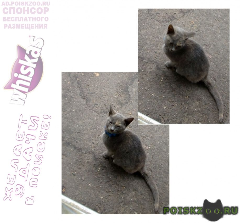 Найдена кошка котёнок г.Климовск