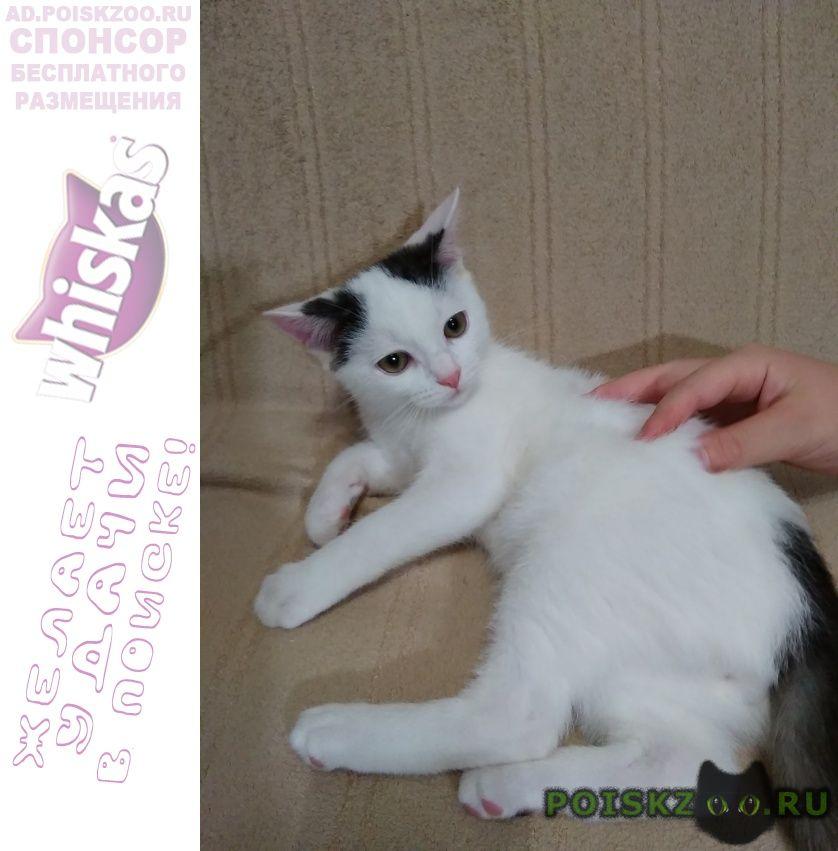 Найден кот малыш в хорошую семью г.Зеленоград