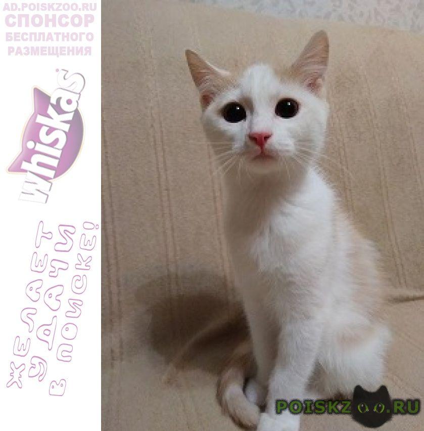 Найден кот ищем дом для маленького ика г.Зеленоград