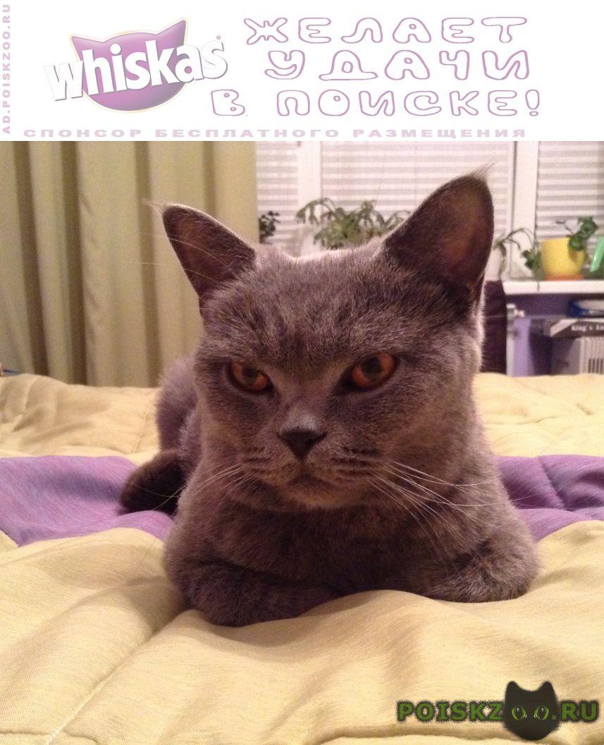 Найдена кошка г.Реутов