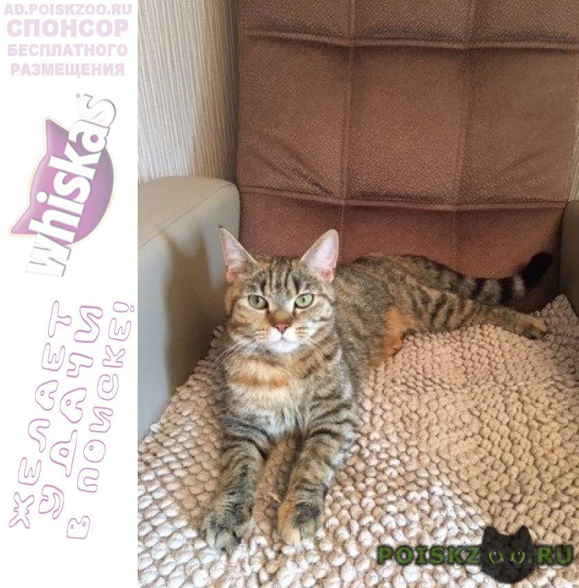 Найдена кошка камышового окраса г.Екатеринбург