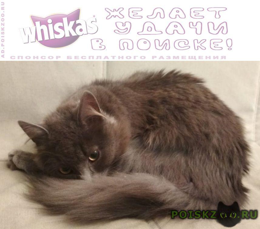 Найдена кошка молодая (или кот). длинношёрстная, г.Санкт-Петербург