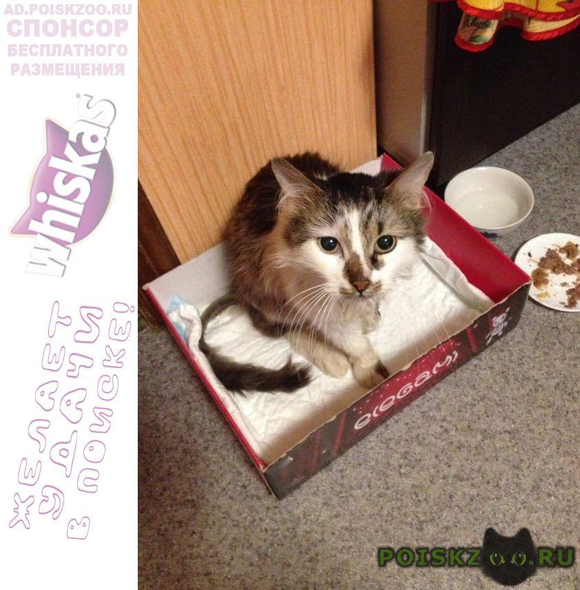 Найдена кошка кот г.Ярославль