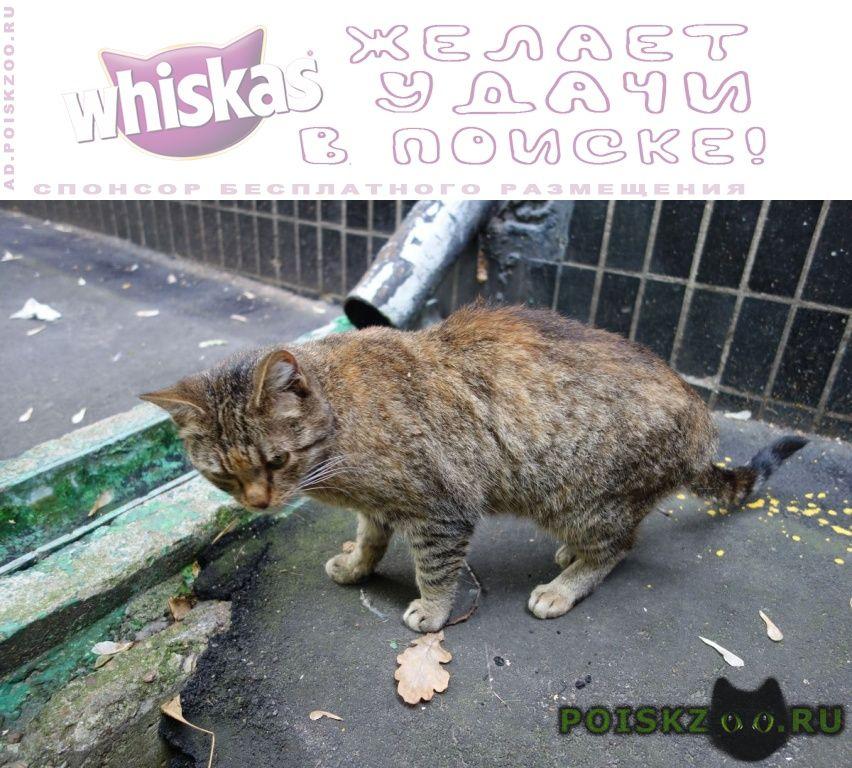 Найдена кошка кот или г.Москва