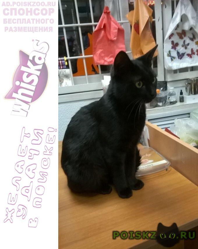 Найден кот на бескудниковском бульваре г.Москва