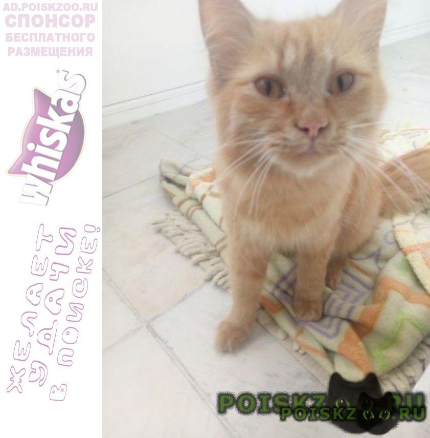 Найдена кошка срочно г.Нижневартовск