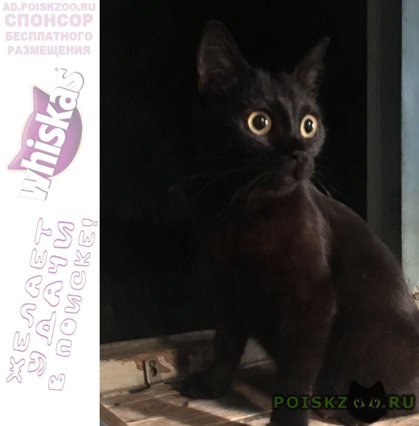 Найдена кошка черная гладкошерстная г.Краснодар