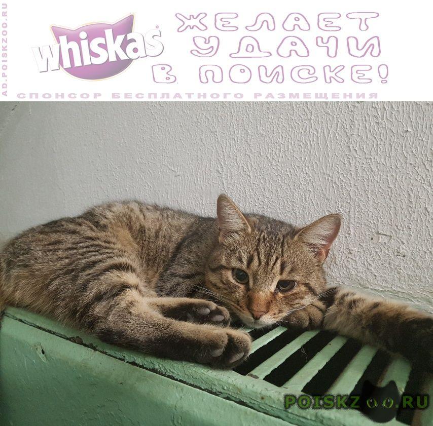Найден кот полосатый г.Химки