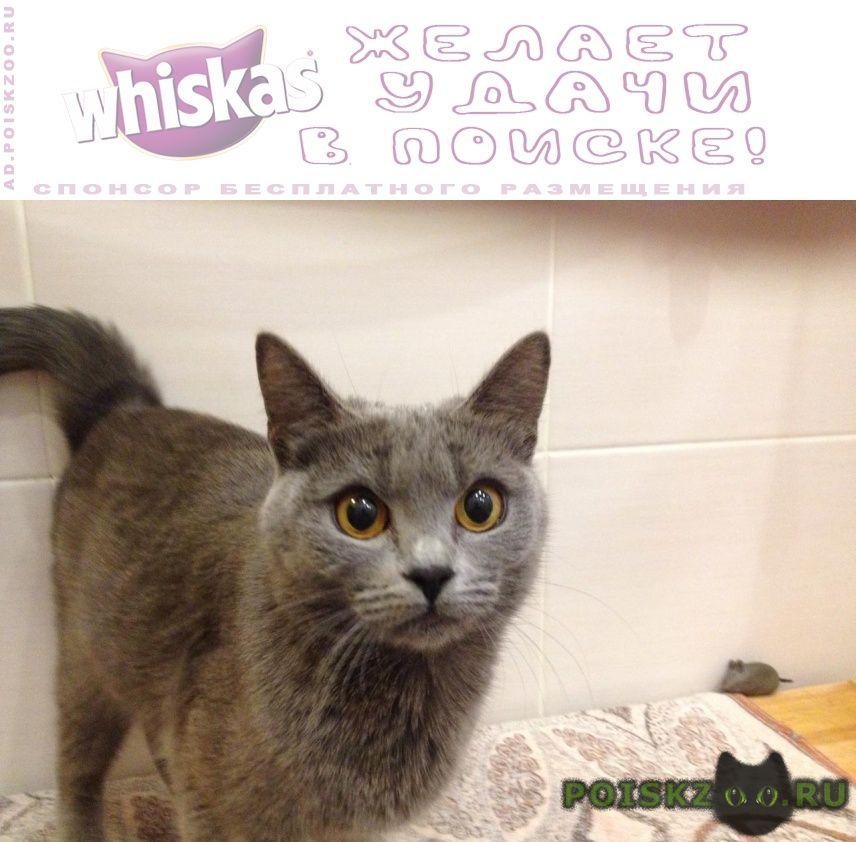 Найдена кошка, ростокино, ул. докукина г.Москва