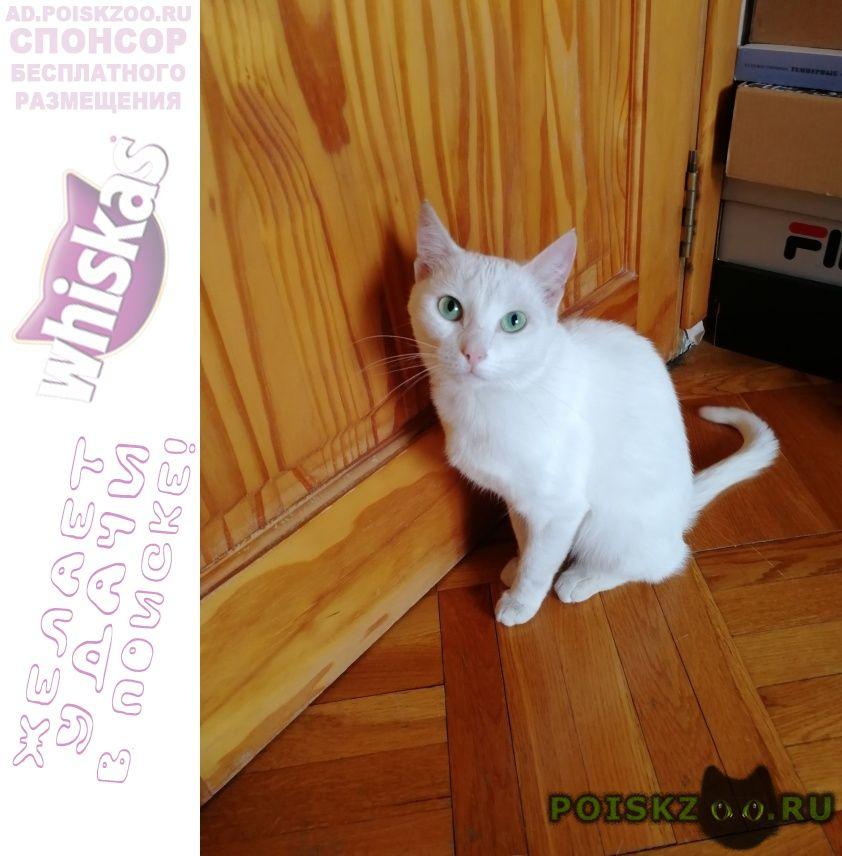 Найдена кошка белая с зелёными глазами. г.Самара