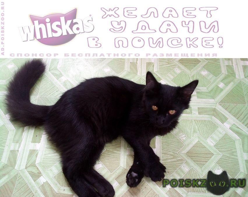 Найден кот.возраст 5-6 мес. г.Батайск