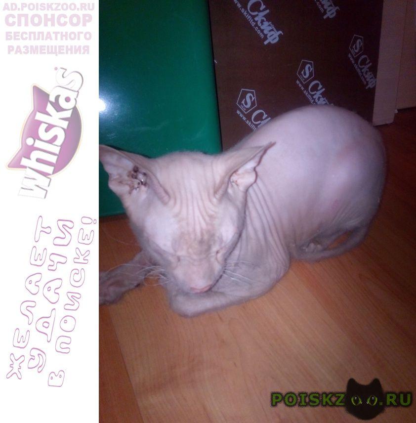 Найдена кошка, с з г.Челябинск
