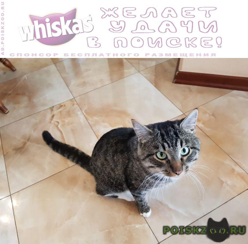 Найдена кошка кот деревня лужки г.Истра
