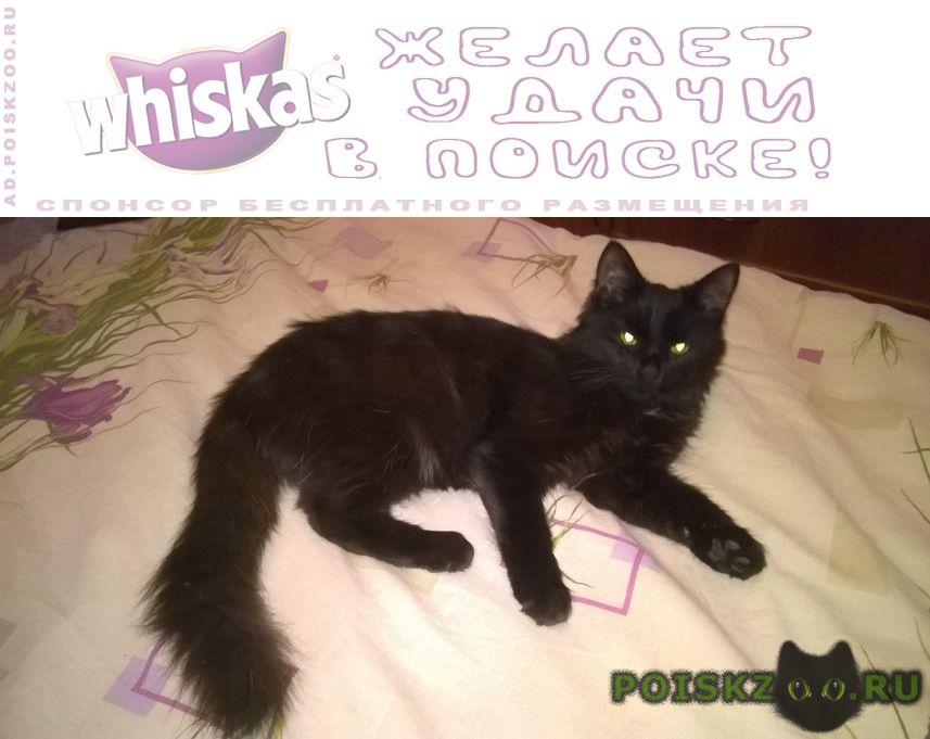 Найден кот черный с желтыми глазами. г.Москва