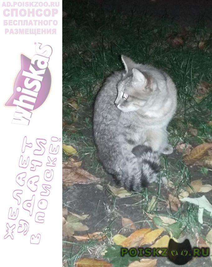Найден кот.юго-западный р-н. и г.Ставрополь