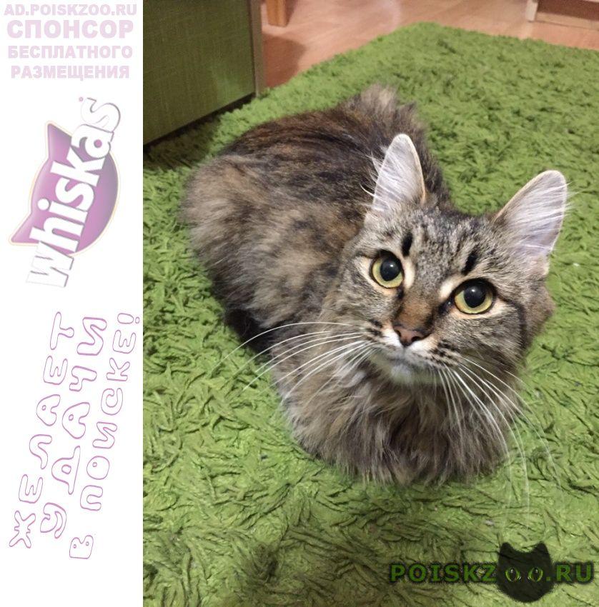 Найдена кошка совсем молодая г.Подольск