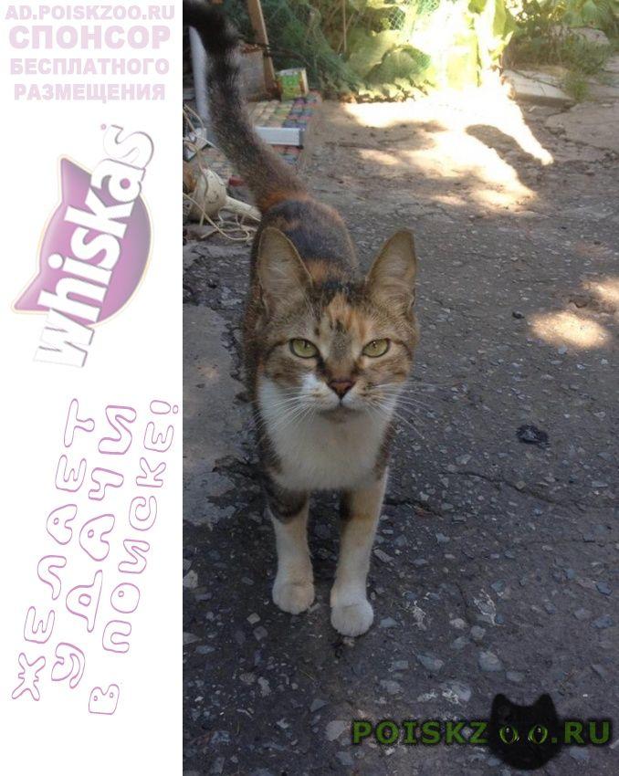 Найдена кошка трехцветная г.Таганрог