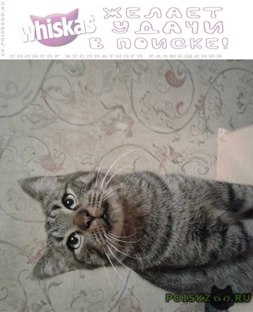 Найден кот камышовый окрас, молодой, ухоженный г.Ивантеевка (Московская обл.)