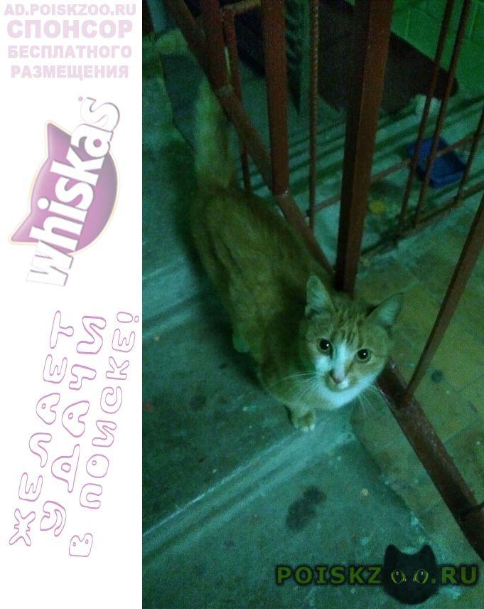 Найдена кошка рыженькая г.Раменское