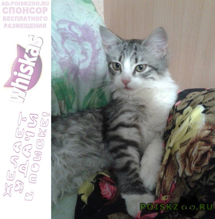 Найдена кошка умница..красавица г.Ульяновск
