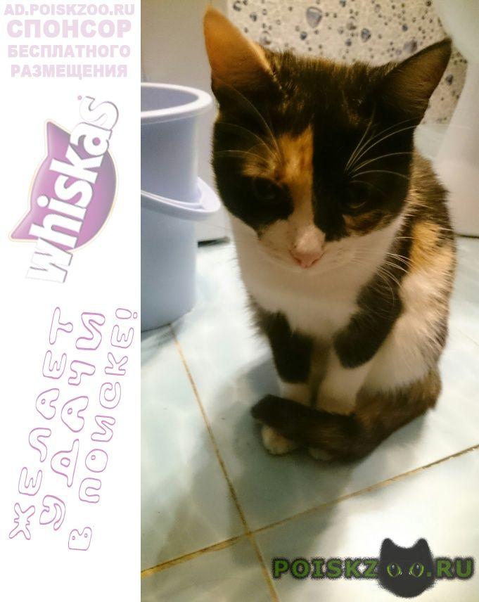Найдена кошка срочно ищем хозяев г.Орехово-Зуево