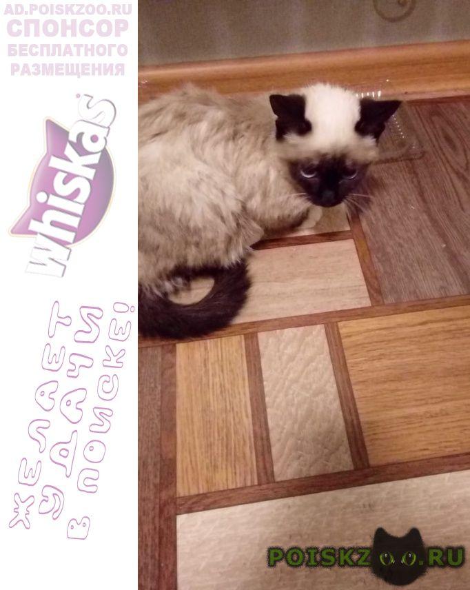 Найдена кошка котенок г.Нефтеюганск