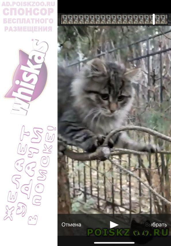 Найдена кошка котёнок в добрые руки г.Москва