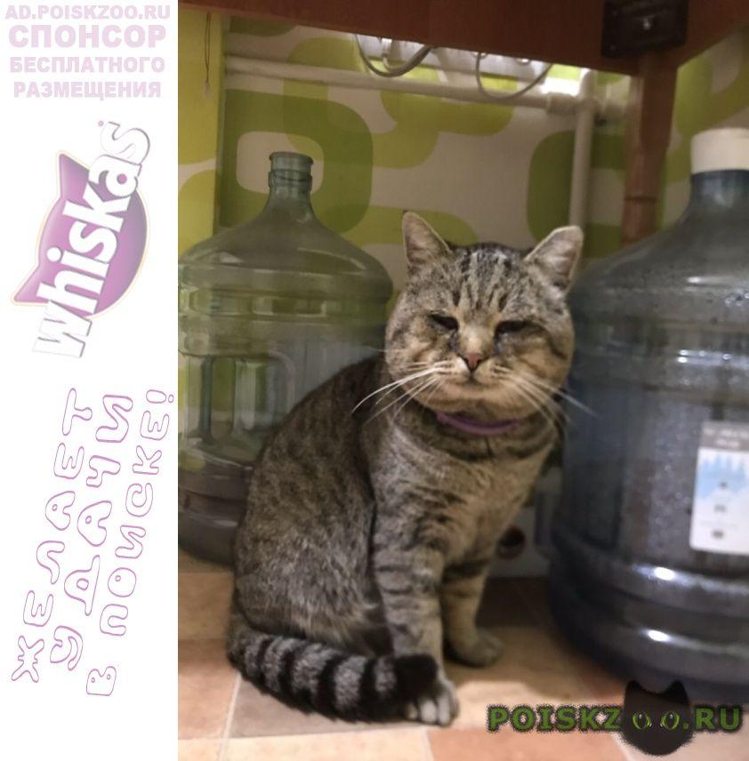 Найден кот г.Киев