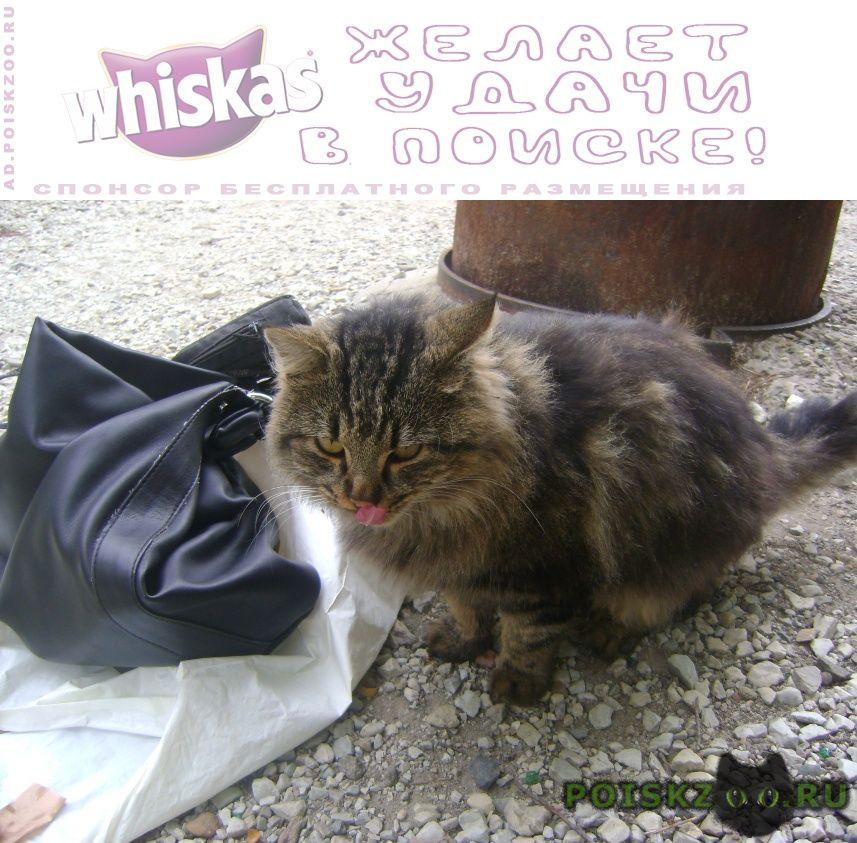 Найден кот сибирячок г.Краснодар